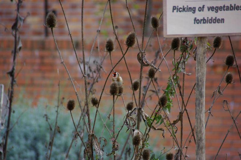 pickingforbidden.jpg