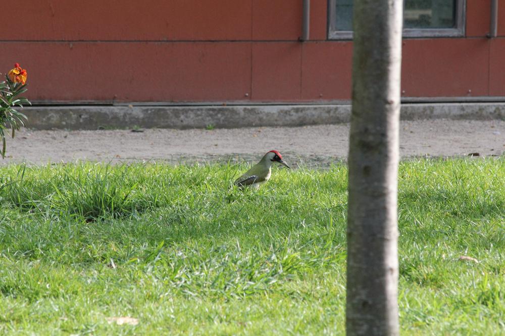 Pic-vert-Bercy-30-mars-2012br